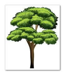 Tree Risk Assessment Richmond Va Ridgeline Tree Service