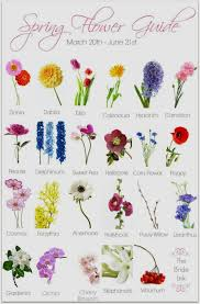 types of flowers and its names thin