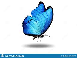 4,432 Butterfly Shadow Photos - Free & Royalty-Free Stock Photos from  Dreamstime