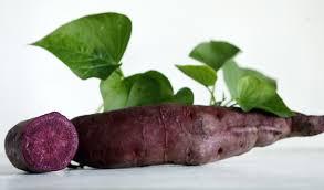 purple sweet potato plant.  Purple All Purple Sweet Potato 6 Slips Click To Enlarge And Plant T