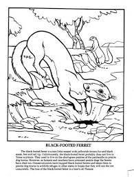 Small Picture Texas wildlife coloring pages This Is How You Play The Game Wiki
