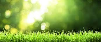 diy spring lawn care tips for a beautiful healthy lawn