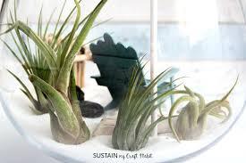 air plant terrarium diy save diy hanging air plant terrarium kit