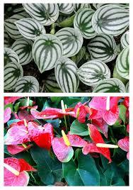 low light indoor plants house plants