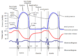 Ecg Chart Labeled The Famous Wiggers Diagram Displaying The Time Variations In