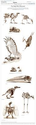 The Naked Bird Illustrated Interactive Feature