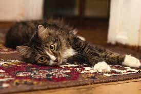 oriental rug cleaners franklin tn professional carpet cleaning