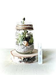 air plant terrarium diy terrarium plants for 9 best ideas about terrarium plants for air plant terrarium diy