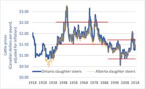 The Cattle Crisis 100 Years Of Canadian Cattle Prices