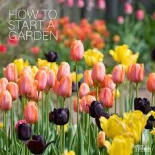 Better Homes And Gardens Follow These 10 Steps To A Magnificent Garden