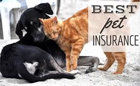 Travel insurance cover for over 70's. Best Pet Insurance For Dogs In 2021 Winners By Coverage Type Caninejournal Com