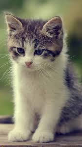 Kittens cutest, Kitten wallpaper ...