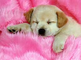 Cute Puppy Dog Wallpapers - Top Free ...