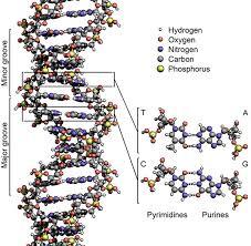 Resultado de imagen de El carbono en la seres humanos