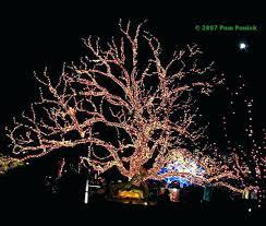 tree trunk lights beautiful design on wrap outdoor led blue uk