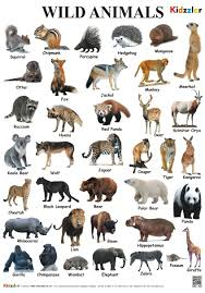 Buy Wild Animals Chart Book Online At Low Prices In India