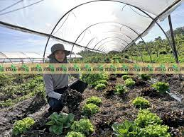 """ไทบ้านฟาร์มเมอร์"""" กาฬสินธุ์ แนะเทคนิคปลูกผักต้นทุนต่ำ ทำกำไรสูง -  เทคโนโลยีชาวบ้าน"""