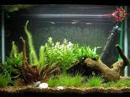 Fun Fish Tank Decorations Aquarium Fish Tank Decorations Aquarium Plants Pinterest
