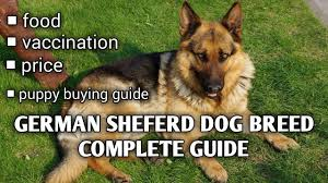 German Shepherd Puppy Food Chart German Shepherd Dog Guide In Hindi Ii Puppy Buying Guide Ii Vaccination Ii Food