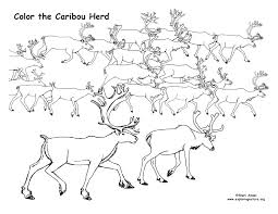 Small Picture Caribou Herd Coloring Page