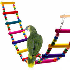 ซ อท ไหน pet bird supplies bird toy s m l size wooden birds parrots toys stand holder hanging swing rings with colorful ในประเทศไทย ราคาออนไลน ใน