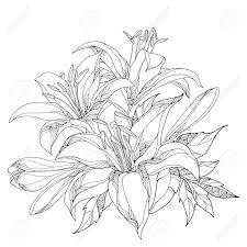 華やかな白いユリの花芽黒白で隔離の葉とベクトルの花束ユリとラウンド構成夏デザインと塗り絵の輪郭