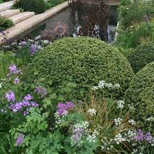 Small Picture Topiary for English Gardens Ideas Advice Big Plant Nursery