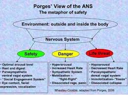 Polyvagal Theory Chart Pin On Porges Stephen