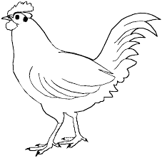 Small Picture chicken color page 100 images chicken coloring pages free
