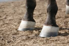 How To Shop For Hoof Supplements