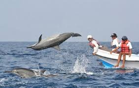Image result for island trip goa