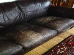 leather couch dogs