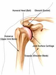 ball and socket joint. http://rosecityacupuncture.com/blog/tag/acupuncture/page/ ball and socket joint