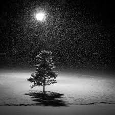 black and white snow photography. Wonderful Snow Time Of Day And Black White Snow Photography O