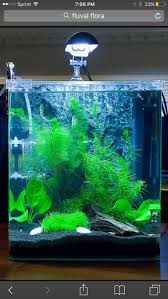 Pet Fish Stuff  Filter flow ideas for a Betta tank