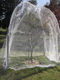 Protecting Fruit Trees From Squirrels And Other Pests How To Protect Your Fruit Trees From Squirrels