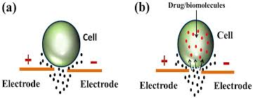 Electroporation Exposing The Truth