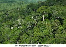 jungle background. Perfect Jungle Rainforest Jungle Background Thailand  Csp50282925 With Jungle Background N