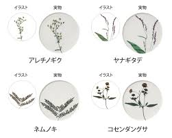 コースター 押花 単品 おしゃれ かわいい ギフト 日本製 アクリル 花 植物 カーネーション