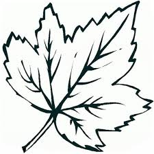 Small Picture Printable Maple Leaf Coloring Page For Kids 47910 In And glumme