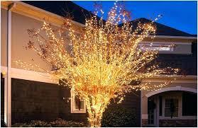 outdoor tree lighting ideas. Hanging Lights Outdoors Tree Outdoor For Trees Light Gallery Ideas Lighting