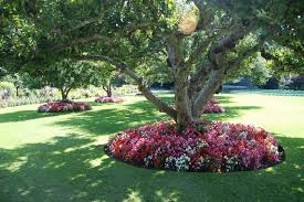 flower garden ideas for around trees elegant planting under trees i want to do this to
