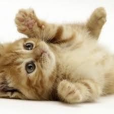 cute pets wallpaper 20722 21259 hd wallpapers jpg