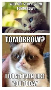 GrumpyCat #meme For more Grumpy Cat stuff, gifts, quotes and meme ... via Relatably.com