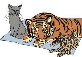 JavaScript for <b>Cats</b>