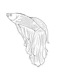 Betta Fish Coloring Pages For Kids And For Adults Betas And