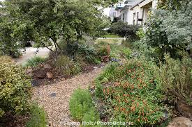 Small Picture California native plant front yard garden in urban drought