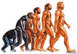 Реферат Эволюция и происхождение человека Но ведь до сих пор вопрос остается открытым если человек произошел от обезьяны то почему в данный период времени такого не происходит