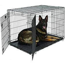 Kong Crate Size Chart Amazon Com Xl Dog Crate Midwest Icrate Double Door