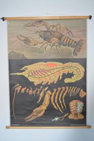Germany Vintage Chart Crayfish Vintage Chart Original